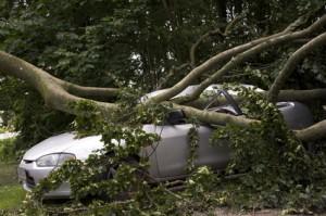 Umgestürzter Baum trifft Auto
